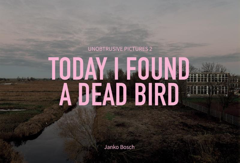 Today I found a dead bird